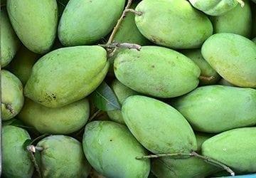 La mangue, reine des fruits exotiques