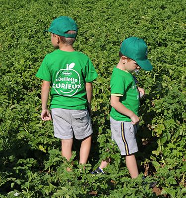 La cueillette des pommes de terre, du 1er au 02 Août, chez Pierre Coisnon