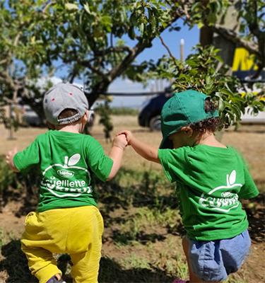 La cueillette des poires, le 08 Août 2019, chez Jean-Yves Perronet