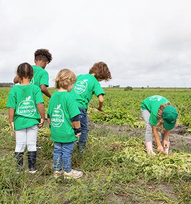 La cueillette des pommes de terre, du 21 au 22 Septembre, chez Adèle Chauvin