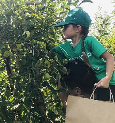 La cueillette des pommes, du 5 au 6 Octobre, chez M. Rolland
