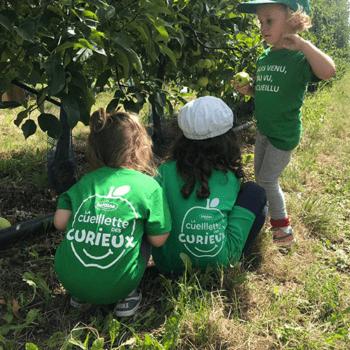 Très vite, les enfants prennent leurs aises au milieu de pommes.