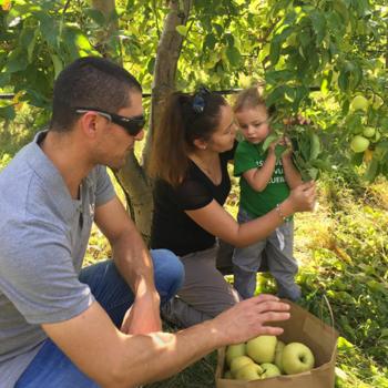 Puis, il est temps d'aller cueillir de bonnes pommes dans les vergers.