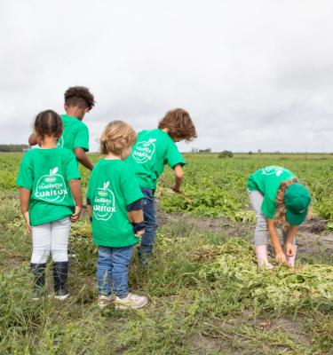 La Cueillette des pommes de terre chez Adèle CHAUVIN