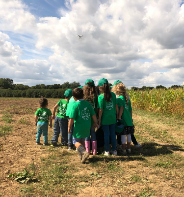 La Cueillette du maïs chez Olivier CHAMBON