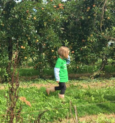 La Cueillette des pommes chez Robert CECCHETTI
