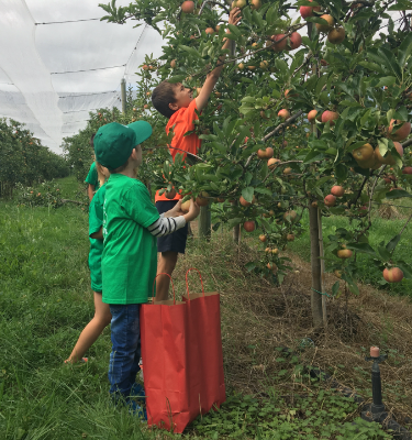 La Cueillette des pommes chez Clément SFILIGOIS (journées annulées)