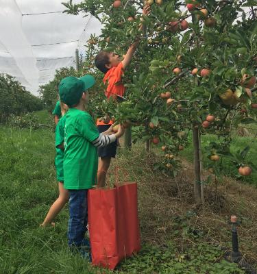 8 - La Cueillette des pommes chez Clément SFILIGOIS (journées annulées)