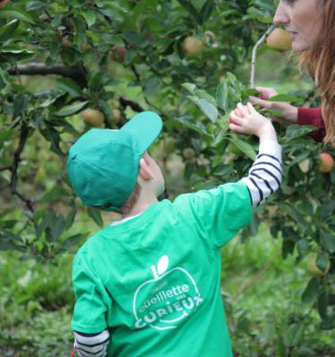 La Cueillette des pommes chez Thomas LE PRINCE