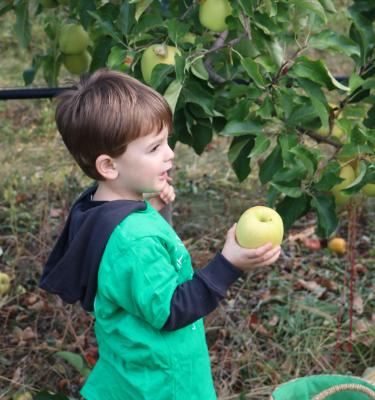 La Cueillette des pommes chez Romain BOREL