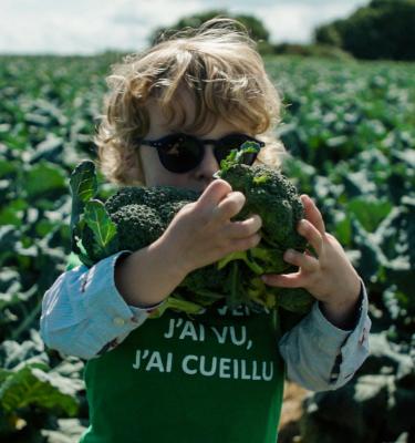 La Cueillette des brocolis chez Aubin LE CHEVERT (annulée)