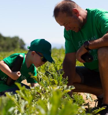 1 - La cueillette des courgettes, du 7 Juillet, chez Alain Mounier