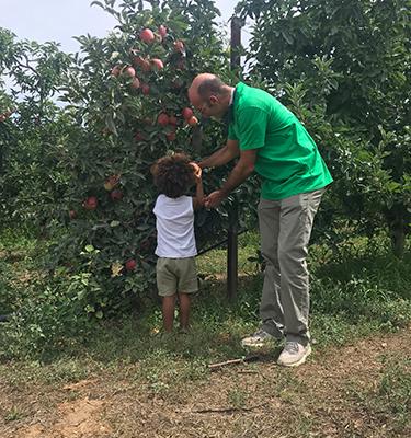 2 - La cueillette des pommes, du 18 août, chez Robert Cecchetti